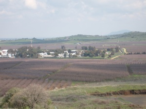 Somewhere near the Golan Heights:  another Breadbasket of Israel!